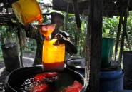 Arrêtons de cracher sur l'huile de palme