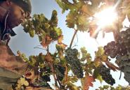 Les Marocains aiment le vin, surtout quand il est «viril et chaud»