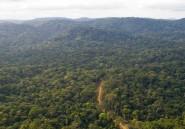 Si rien n'est fait, la forêt équatoriale va disparaître