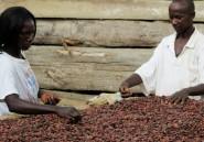 Au Cameroun, les jeunes vont à l'école du cacao