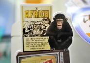 On peut parler de l'Afrique autrement qu'en évoquant des singes