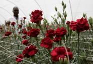En Somalie, un fleuriste cultive l'espoir