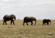 Les éléphants ont un coeur
