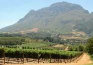 La couleur pourpre du raisin sud-africain