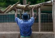 Le pays où les crocodiles ne sont pas dangereux