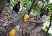 Soubré : nouvelle réforme café-cacao / Les producteurs dénoncent le racket (Soir Info)