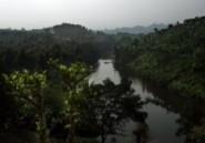 Madagascar : une invasion de criquets met les paysans à genoux