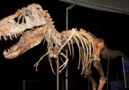Les Etats-Unis rendent de nouveaux os de dinosaures à la Mongolie