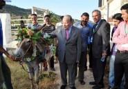 """Merbouh, le plus bel âne du Maroc """"s'entraîne"""" pour préserver son titre"""