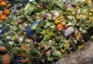 Journée mondiale de l'environnement : Lutter contre le gaspillage alimentaire