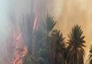 200 palmiers détruits dans un incendie à l'Oasis Naga à Kébili