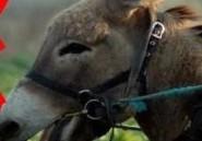 Tambacounda: Un jeune surpris en train de dépecer un âne
