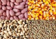 Agriculture: la mise en place des semences a démarré depuis le 13 mai