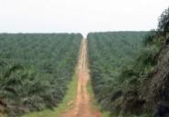 """Huile de palme : les Africains se mobilisent contre le """"dénigrement"""""""
