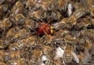 Des abeilles empêchent l'enterrement d'un cadavre à Saré Méta
