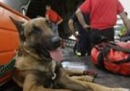 Italie : les trafiquants utilisaient des chiens pour transporter la drogue