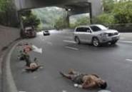 Ils font la sieste au beau milieu d'une autoroute