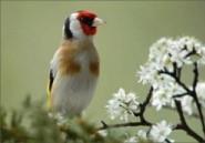 L'homme qui murmure à l'oreille des oiseaux