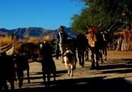 Madagascar: 73 morts dans les accrochages avec des voleurs de zébus