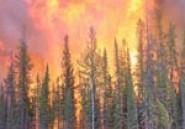 Un incendie ravage 10 hectares de forêts à Jebel Rihana à Béja