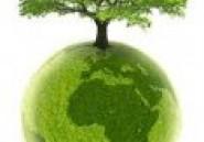 Reboisement : folklore ou volonté réelle de protéger l'environnement ?