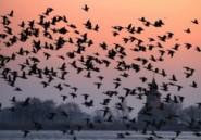 Les oiseaux s'adaptent aux limitations de vitesse