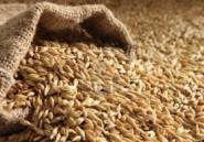 La Tunisie va importer 16 millions de quintaux de céréales