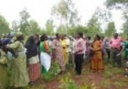 Lutte contre la déforestation :
