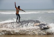 Ghana: cinq carcasses de baleines échouées en une semaine