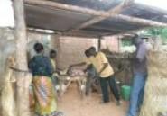 Abattage d'animaux : Bouchers s'en foutent d'abattoir