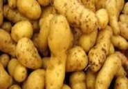 Saisie de pommes de terre et d'oignons commercialisés hors circuits réglementaires