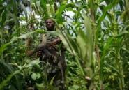 RDC: les Maï-Maï exclus des concertations nationales