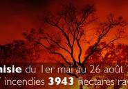 Pourquoi les forêts tunisiennes s'enflamment-elles ?