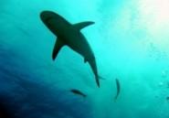 Australie: la surpêche de requin menace les coraux