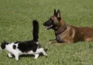 Un juge pour mettre un terme aux litiges entre couples divorcés concernant la garde des animaux de compagnie