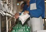 L'Algérie diminue nettement ses importations de lait