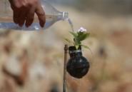 Diaporama. Quand les Palestiniens recyclent les bonbonnes de gaz lacrymogène en pots de fleurs