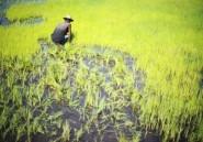 Madagascar: insécurité alimentaire pour 4 millions de personnes