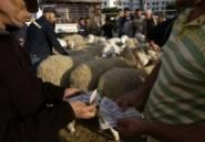 Revue de presse. Algérie : Fausse monnaie contre vrais moutons