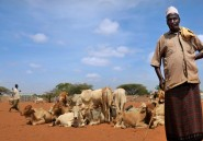 Takaful, l'assurance agricole halal