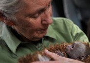 Jane Goodall: la Chine pille l'Afrique comme les colonisateurs l'avaient fait