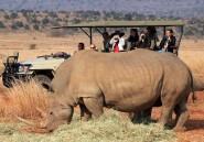 Des rhinocéros sud-africains transférés au Botswana pour fuir le braconnage