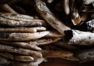 Tchad: une tonne d'ivoire détruite dans le parc national de Zakouma