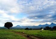 RDC: le pétrole, menace ultime sur le plus vieux parc naturel d'Afrique