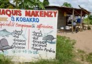 En Côte d'Ivoire, l'agouti, interdit aux gourmets pour cause d'Ebola