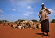 Kenya: satellites de la Nasa et assurance halal protègent le bétail