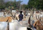 Soudan du Sud: plus de 100 morts au cours d'un raid pour du bétail