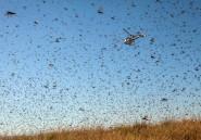 Madagascar: une pluie de pesticides pour lutter contre l'invasion de criquets