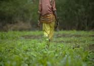 En Afrique, la révolution agricole reste