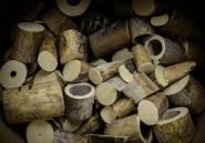 Cameroun: saisie de 187 pointes d'ivoire près de Yaoundé